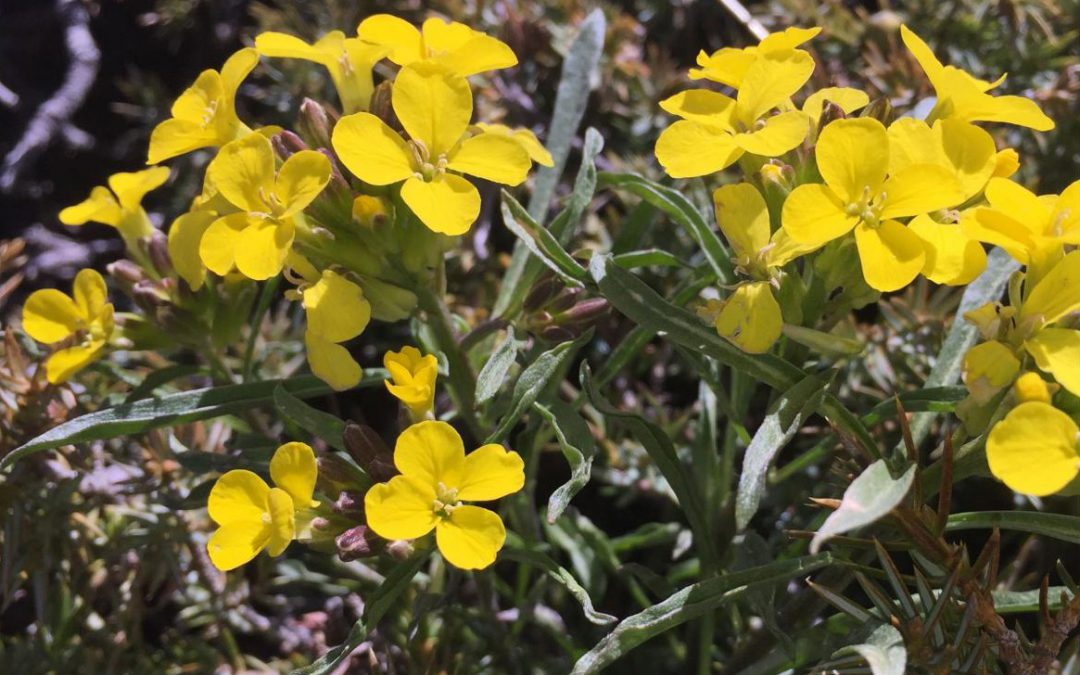 Cursillo de Conservación de Flora en el P.N. de la Sierra de Guadarrama