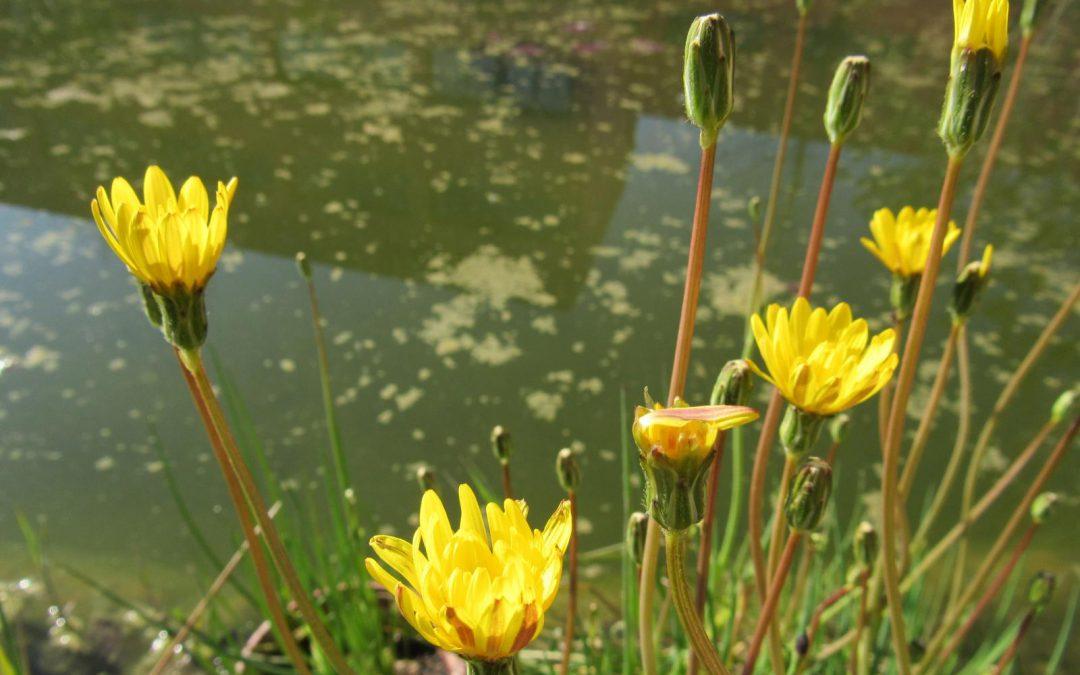 Propuestas cuatro nuevas plantas para el Catálogo Español de Especies Amenazadas