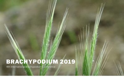 IV Congreso Internacional Brachypodium 2019