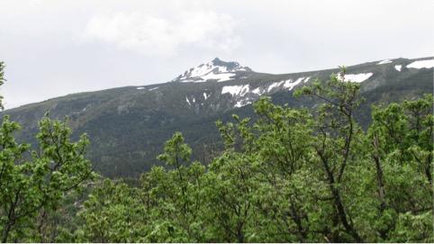"""Entregado el informe del proyecto """"El cambio climático y la composición florística de los hábitats: ¿ha habido ya cambios en el Parque Nacional de la Sierra de Guadarrama? El caso de los robledales de Quercus pyrenaica"""""""