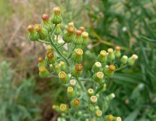 Flora alóctonainvasora, un problema de todos, la importancia de la sociedad
