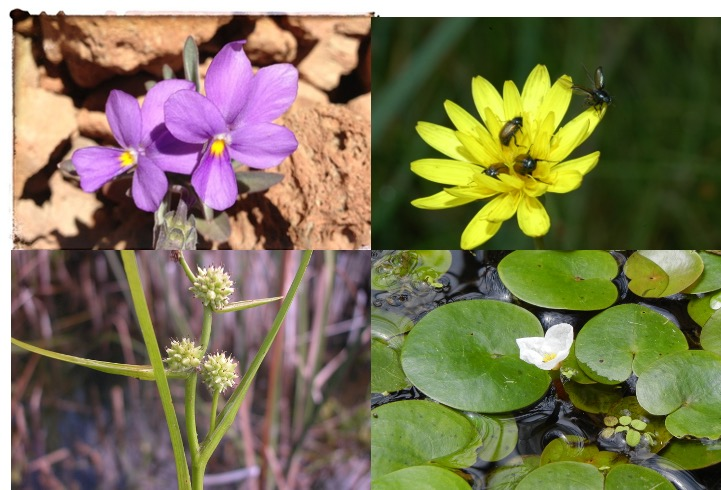 Cuatro nuevas plantas protegidas a propuesta de SEBiCoP