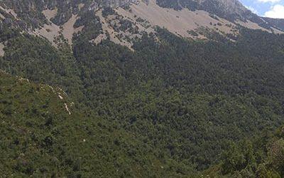 La Flora del Parque Natural de la Sierra y Cañones de Guara