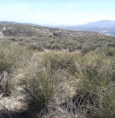 Almería es mucho más que tierra de esparto